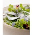 Dorotea Salatbestik